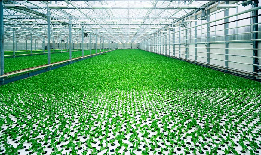 Fujitsu Advancing Cloud Based Greenhouse Technology In